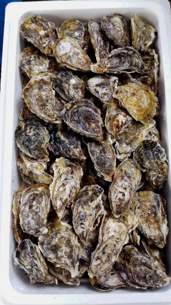 oyster-gyousha-01