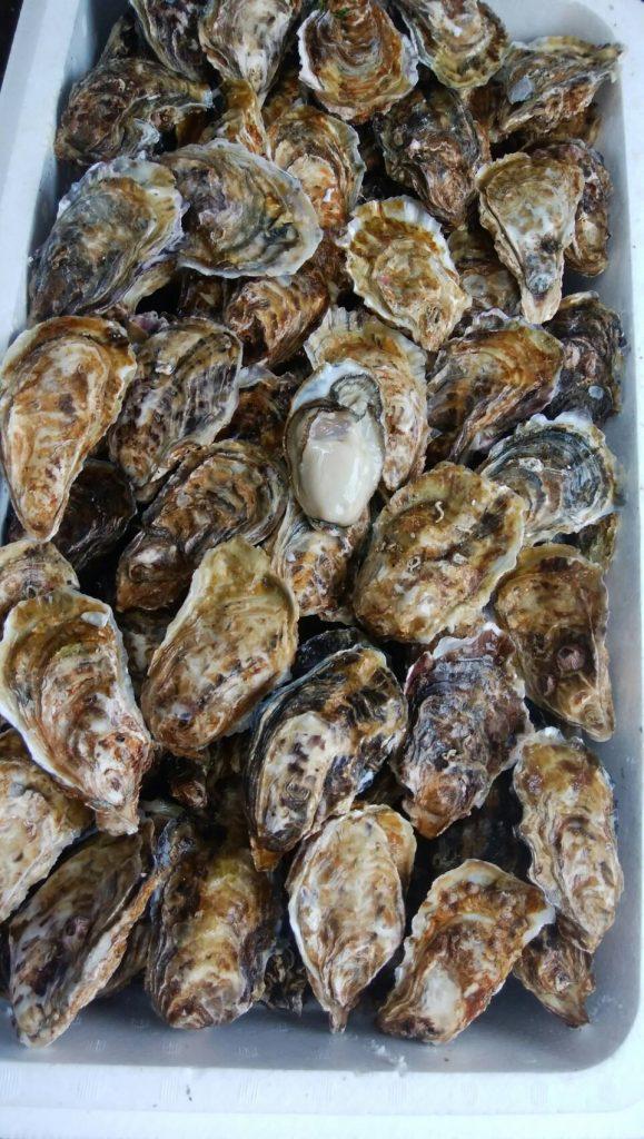 oyster-gyousha-02